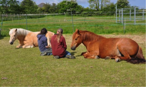 horses lying down, Awards for All, mental health, Bodster