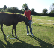 The power of equine therapy pic2