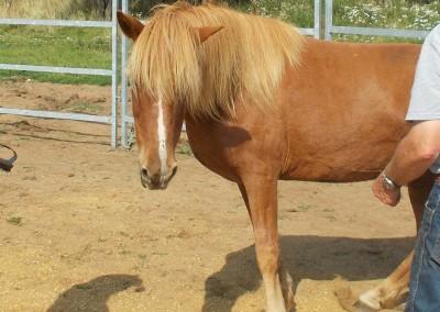 Bodster pony