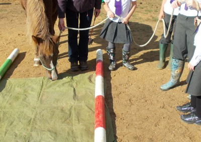 Learners with pony