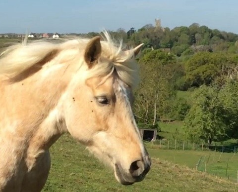 Tippy Bodster pony